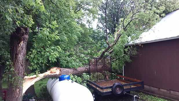 Trees were down in several areas.