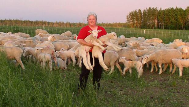 Janet McNally raises sheep near Hinckley Minnesota in a Regenerative Grazing system.