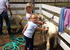 Emma and Lainey Fawver getting their sheep ready for the Clearwater County Fair.